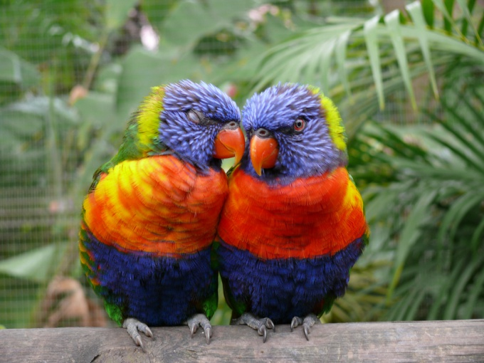 Make a pair of parrots nesting house