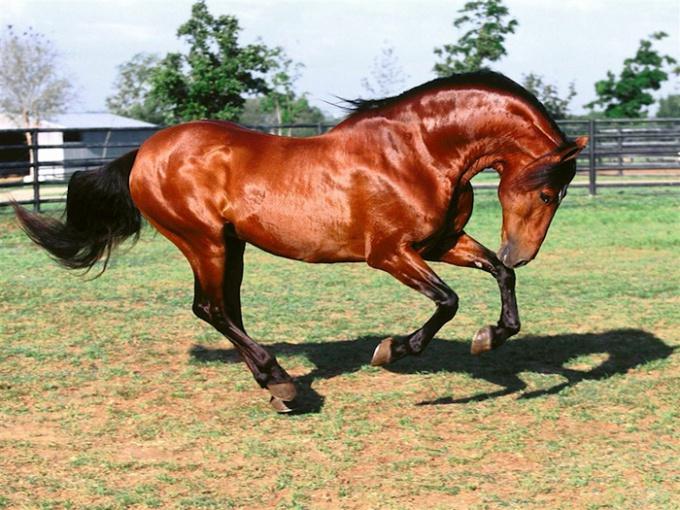 как объезжать лошадь