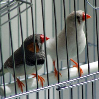 как сделать клетку для птиц в домашних условиях