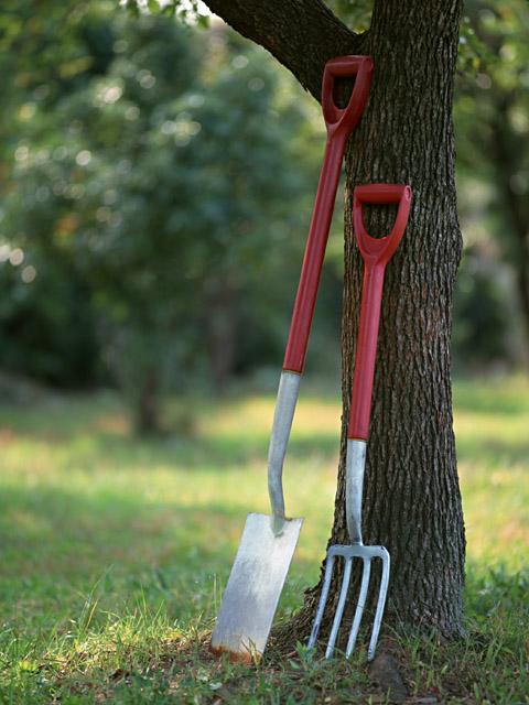 Правильно подберите место для будущего дерева