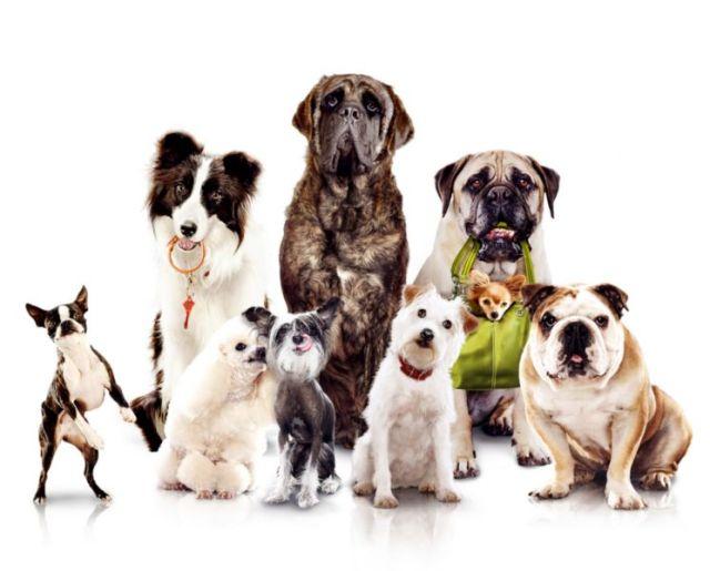 Как разводить собак