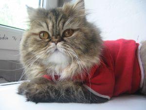 Когда же разработают каталог одежды для кошек...