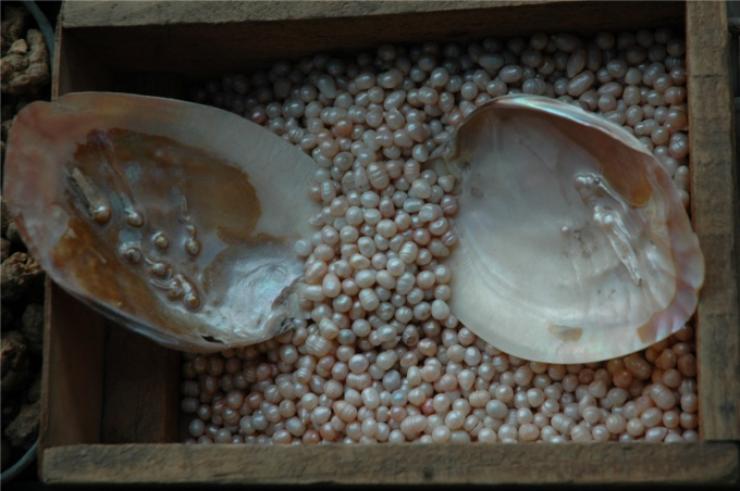 How to grow pearls