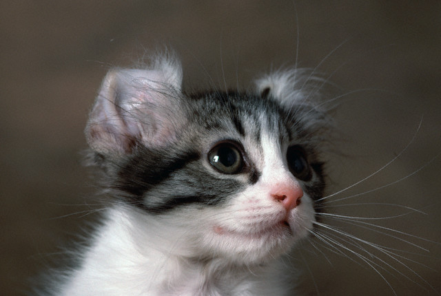 Как понимать кошачий <strong>язык</strong>