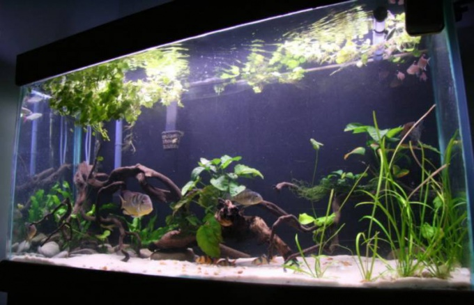 How to change the water in the aquarium
