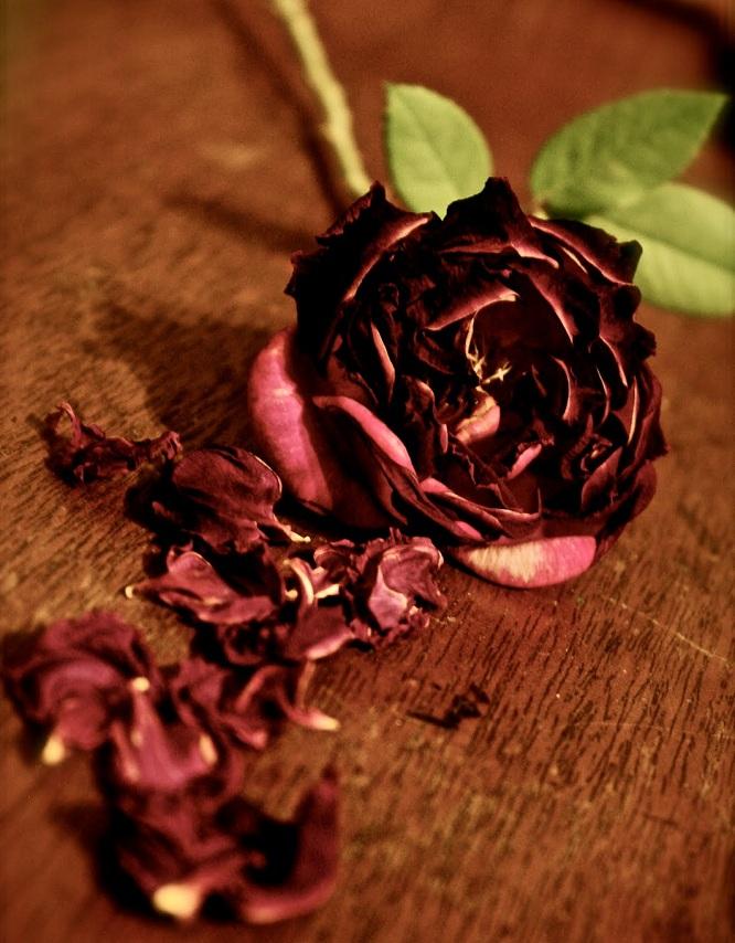 Как высушить розу