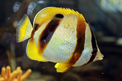 Мотыль - прекрасный корм для всех аквариумных рыб