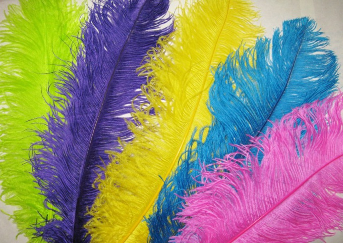How to paint feathers