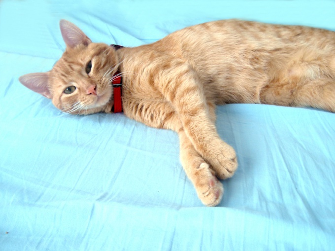 как свести не опытных кота и кошку