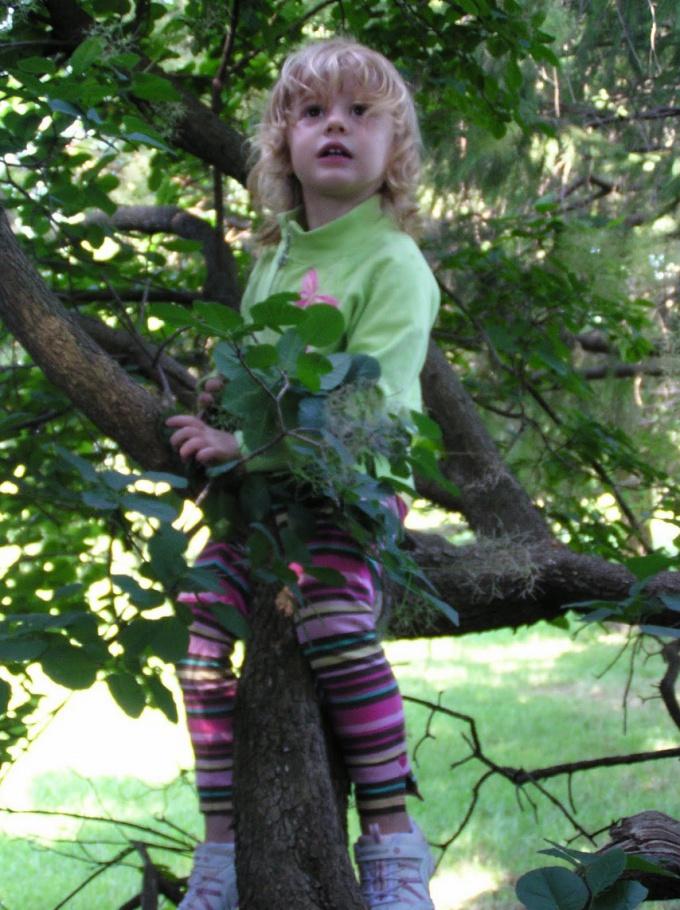 Как узнать своё дерево