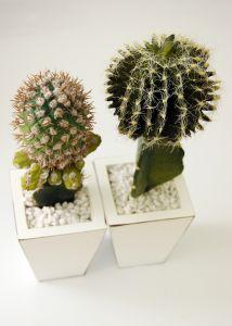 Privitye kaktusy