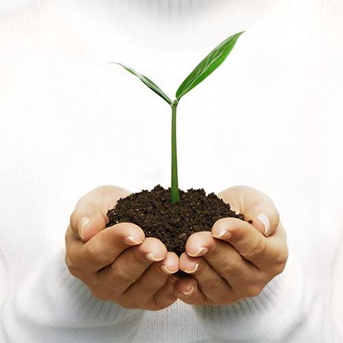 Как украсить свой огород
