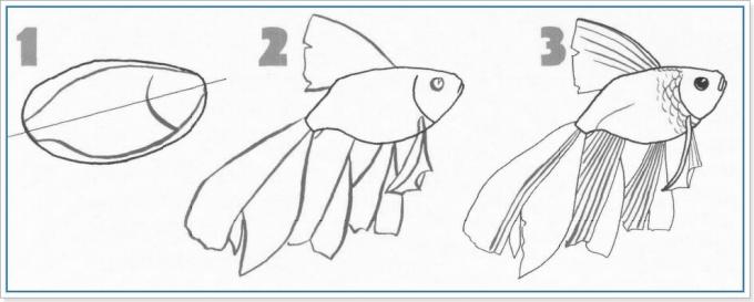 Плавными линиями рисуем плавники и хвост