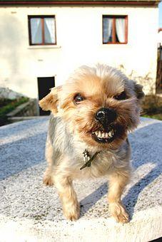 как почистить зубы собачке