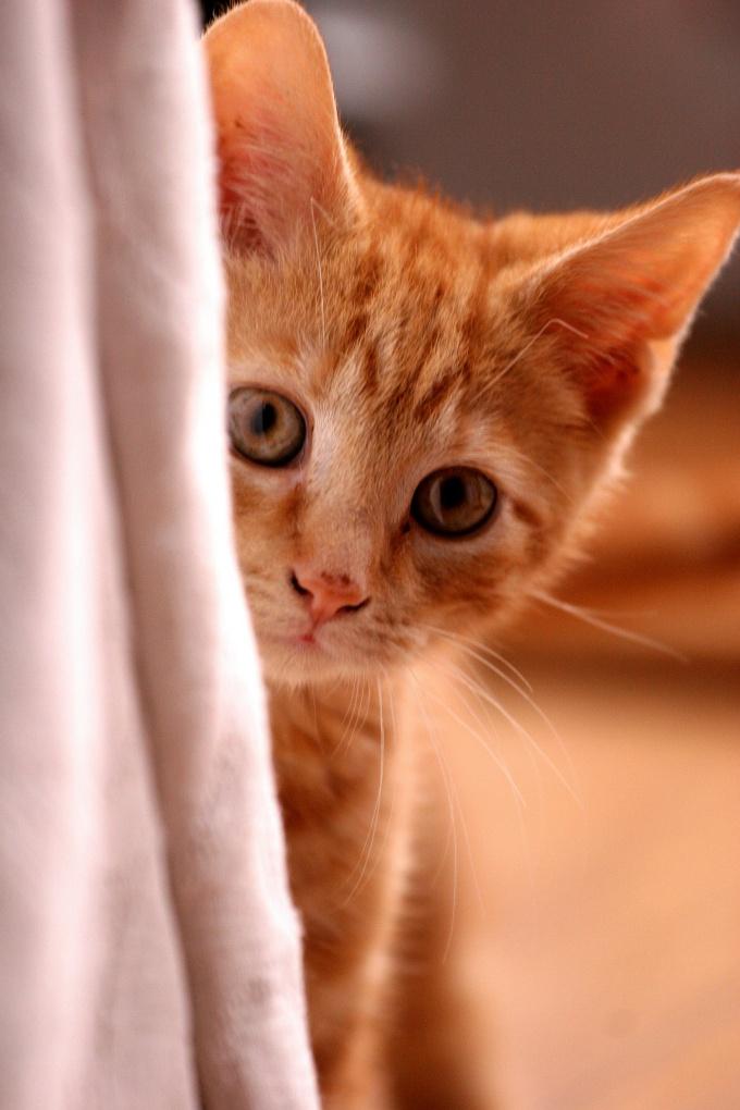 Как успокоить котёнка