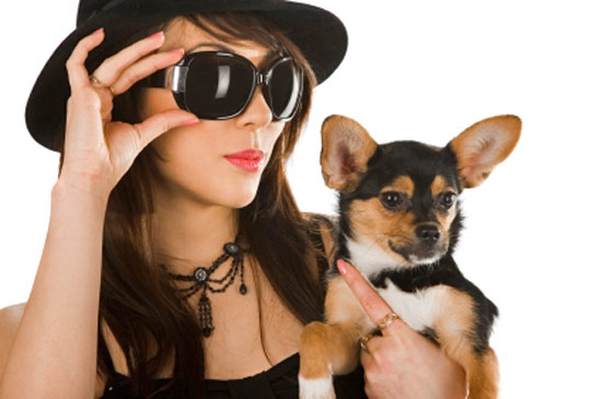 Как выбрат <b>кличку</b> для собаки