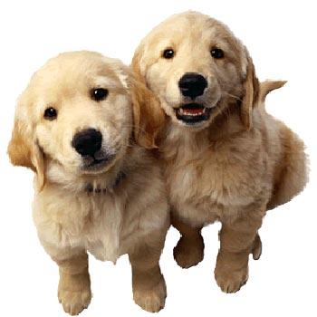 Как выбрат кличку для собаки