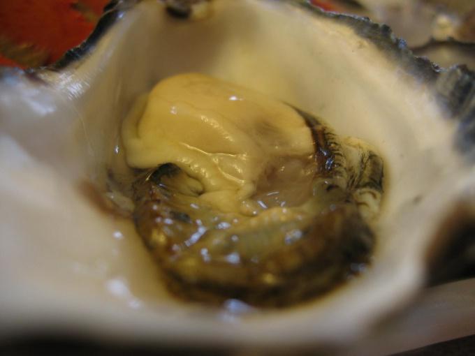 Как готовить омлет с устрицами