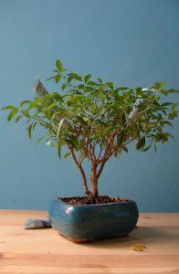 Денежное дерево - оригинальный подарок на день рождения