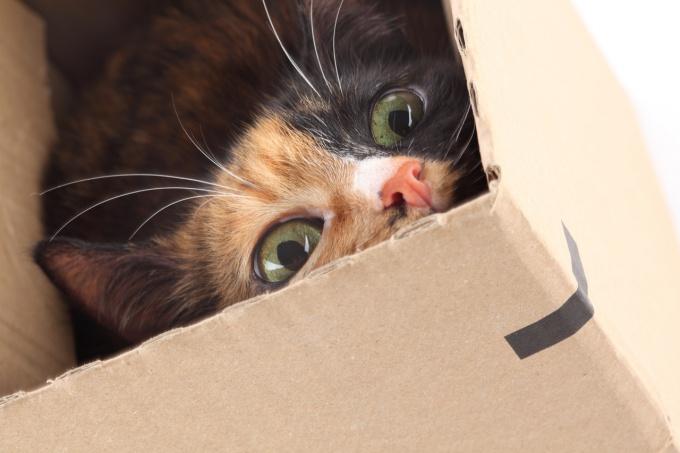 как понять что у кошки начались роды