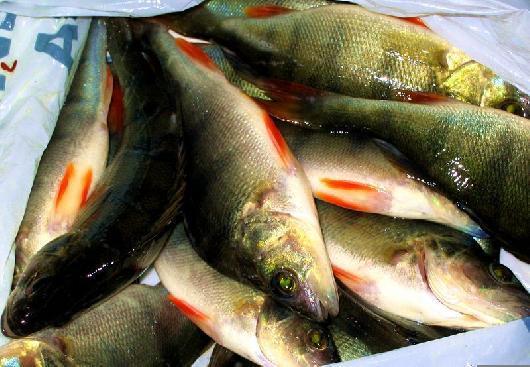 Как приготовить вкусную <strong>рыбу</strong>