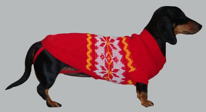 вязать свитер собаки