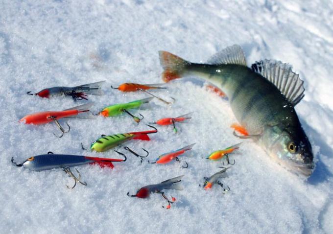 Ловись, рыбка, и зимой и летом!