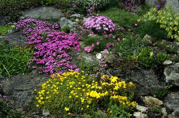 Альпийская горка с грамотно подобранными растениями будет радовать вас круглый год.