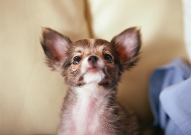 обезболивающее для собаки