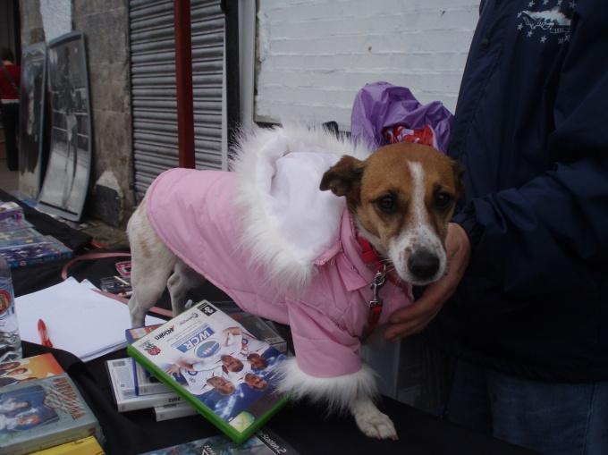 Украсить собачий костюм можно кусочками меха