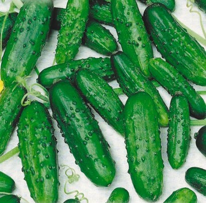 How to germinate cucumber seeds