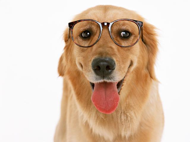 как узнать какой пароды собака