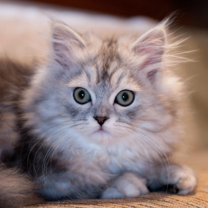 документы для кошек как сделать