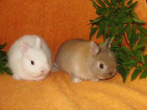 как разлечить кроликов по полу