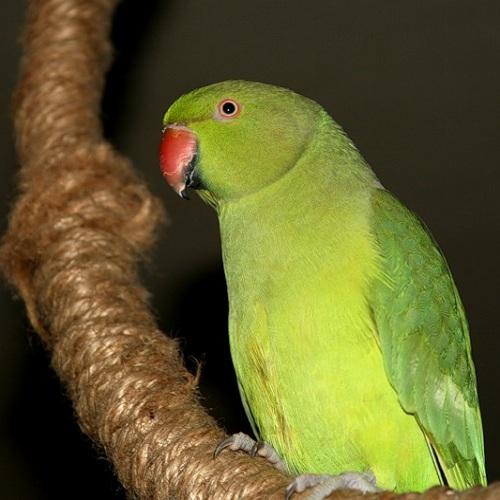 как сделать клетку интересной для попугаев