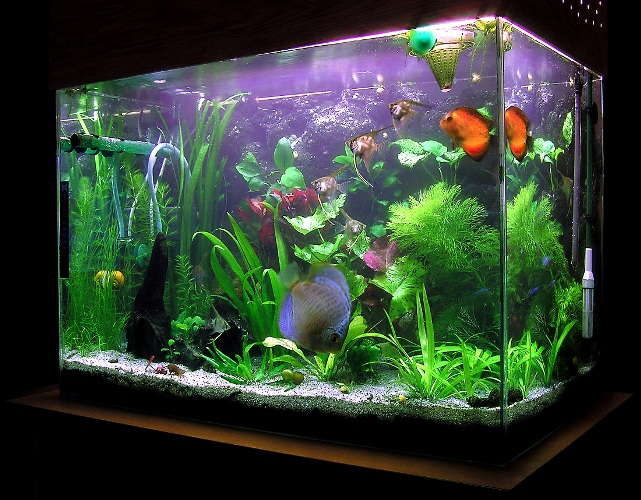 как сделать компресор для аквариума