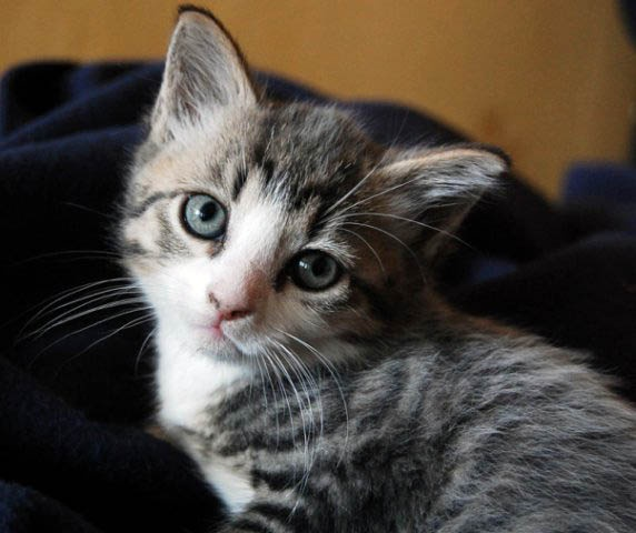 как отличить кота от кошки в 2 месяца