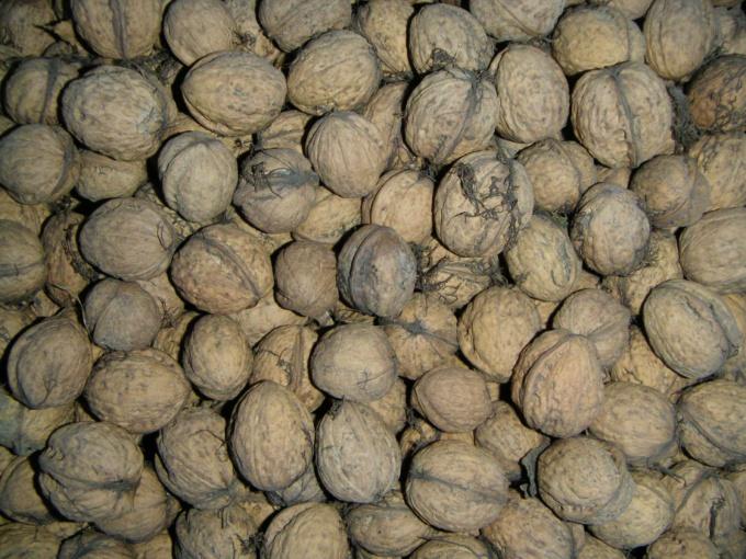 У грецкого ореха один недостаток - его нужно расколоть