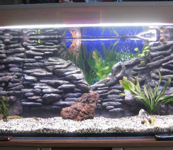 устройство двойного фона в аквариуме