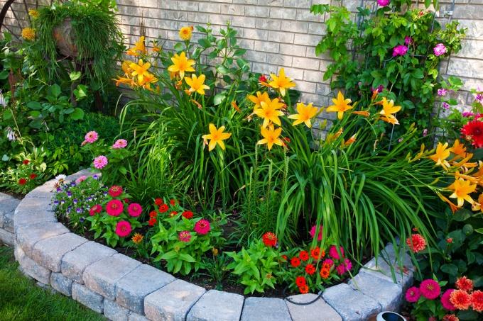 На клумбе лучше не высаживать большого многообразия цветов