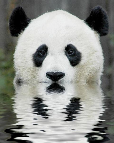 Panda - симпатичный и надежный антивирус