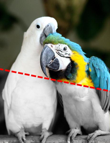 Как сделать из цветного изображение чёрно-белое