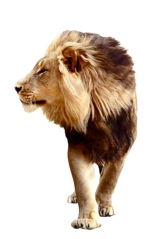 Как приручить мужчину-льва
