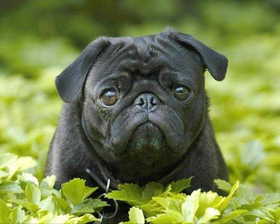 какие документы нужно сделать собаке