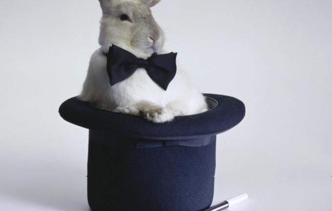 как сделать клетку для кролей