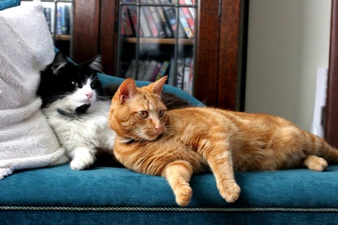 как развязать кота первый раз