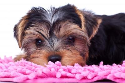 выкройка лежанки для собаки своими руками