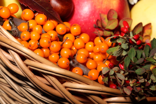 Sea buckthorn oil - a pantry of useful substances.