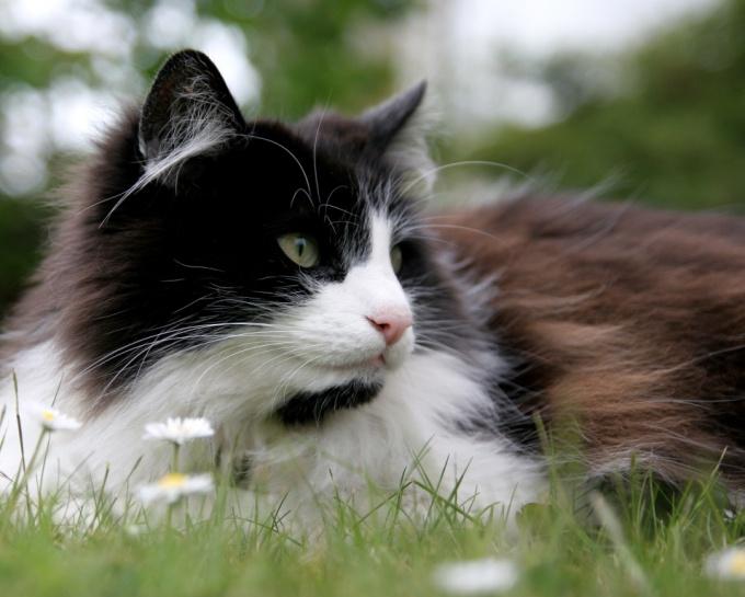 Как прогнать кошку