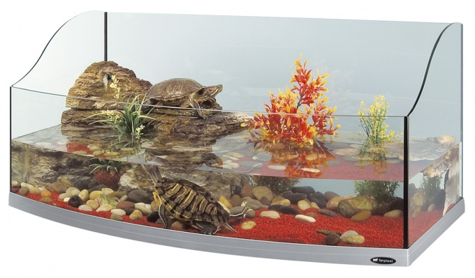 How to make a terrarium for turtles